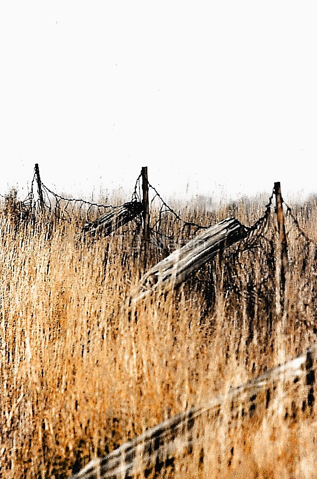 Old Fence - Swansea, Massachusetts by T.J. Martin