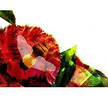 Bee & Flower Photographic Print