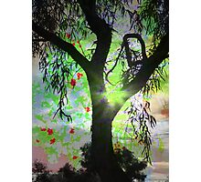 Dream Tree Photographic Print