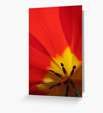Abstractions... close-up of a tulip Greeting Card