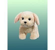 Toy puppy Photographic Print