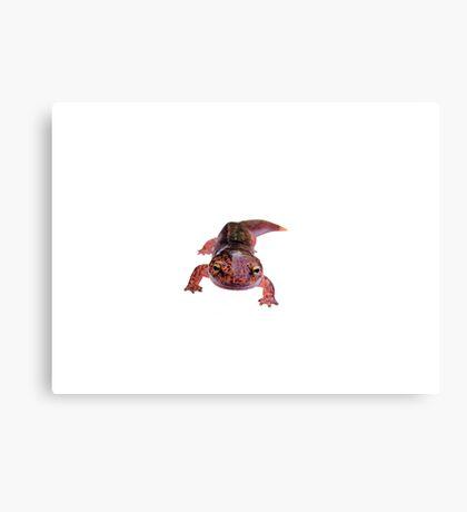 Northern Red Salamander  Canvas Print