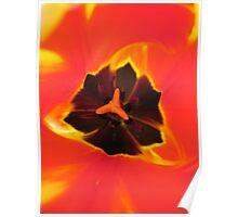 Inner Journey of a tulip Poster