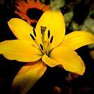 Yes Beautiful by Esperanza Gallego