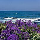 La Jolla Coast IV by heatherfriedman