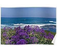 La Jolla Coast IV Poster