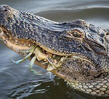 Alligator eating a Blue Crab by Paulette1021