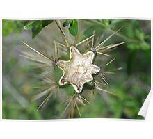 Broken Cactus Poster