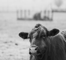 A Cow Named Steak by Jena Ferguson