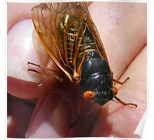 Cicada ~ A Very Annoying Insect Poster