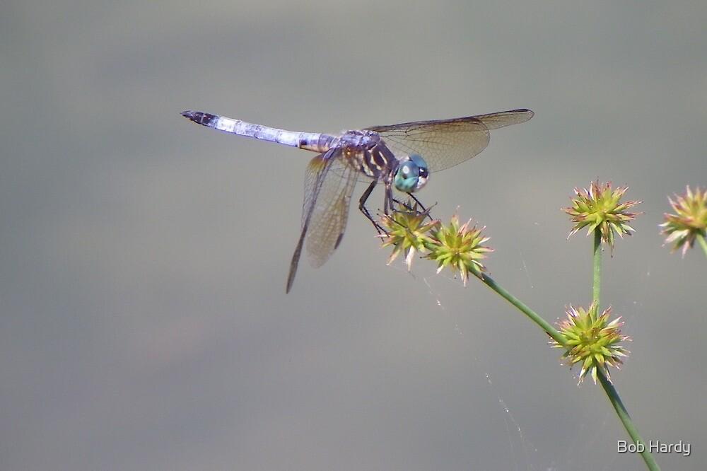 Dragonfly by Bob Hardy