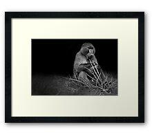 Black and White Baboon  Framed Print