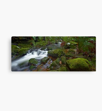 Flowing Moss - Blue Mountains NSW Canvas Print