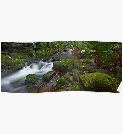 Flowing Moss - Blue Mountains NSW Poster