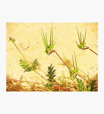 My Weeds, My Abstract Photographic Print