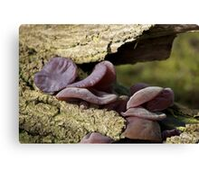 Singing Fungus Canvas Print