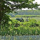 The Turf Farmer - Cutting The Turf - Kingston - Rhode Island by Jack McCabe
