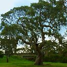 The Tree as is, Gippsland by Virginia McGowan