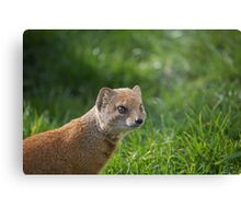 Mongoose  Canvas Print