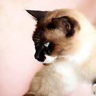Puss by Jenny Dean
