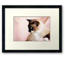Puss Framed Print