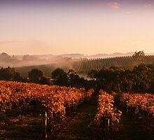 Misty Vineyard, Nr Gumeracha, Adelaide Hills, SA by Gerijuliaj