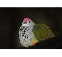 Rose-crowned Fruit Dove  (Ptilinopus regina),  Photographic Print