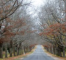 Avenue of Honour, Macedon, Victoria by 2HPhotography