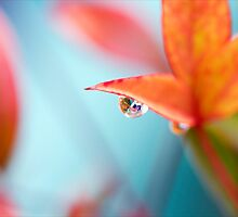 Refraction of a House by Josie Eldred