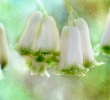 Bells Ring Out  by Elaine  Manley