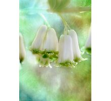 Bells Ring Out  Photographic Print
