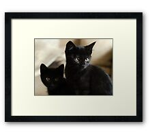 Beautiful Black Kittens Framed Print