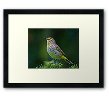 Calm Palm  Framed Print