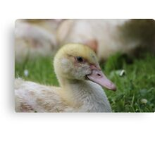 Christmas Poultry Canvas Print