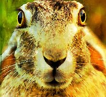 Hare-brained by Bunny Clarke