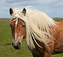 Beautiful blond hair! by Trine