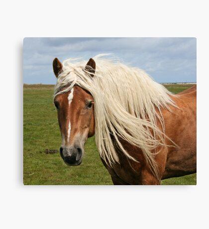 Beautiful blond hair! Canvas Print