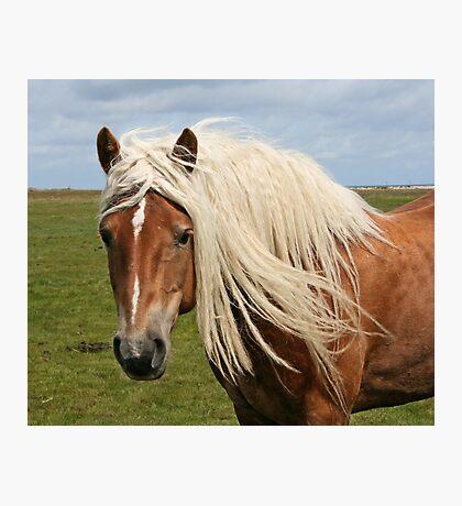 Beautiful blond hair! Photographic Print