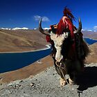 Yamdrok Tso Lake and a Yak by Mark Bolton
