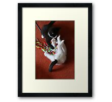 Playfighting Kittens Framed Print