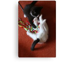 Playfighting Kittens Canvas Print