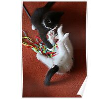 Playfighting Kittens Poster