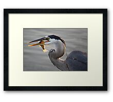 Seeing Eye to Eye Framed Print