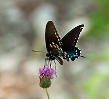 Swallowtail on the Guadalupe River by Robert Kelch, M.D.