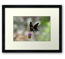 Swallowtail on the Guadalupe River Framed Print