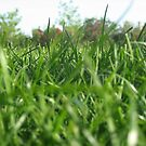 Green as Grass. by 3tack