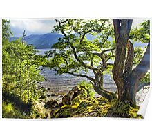 Twisted Tree, Derwent Water, Lake District Poster
