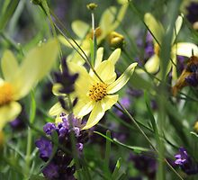 Beautiful yellow and purple flowers by SunshineSong
