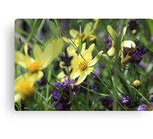 Beautiful yellow and purple flowers Canvas Print