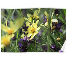 Beautiful yellow and purple flowers Poster